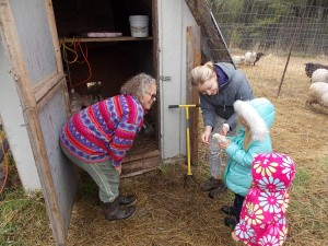 Clover Valley Farms' little chicks are met with big enthusiasm.